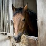 paardenlogies
